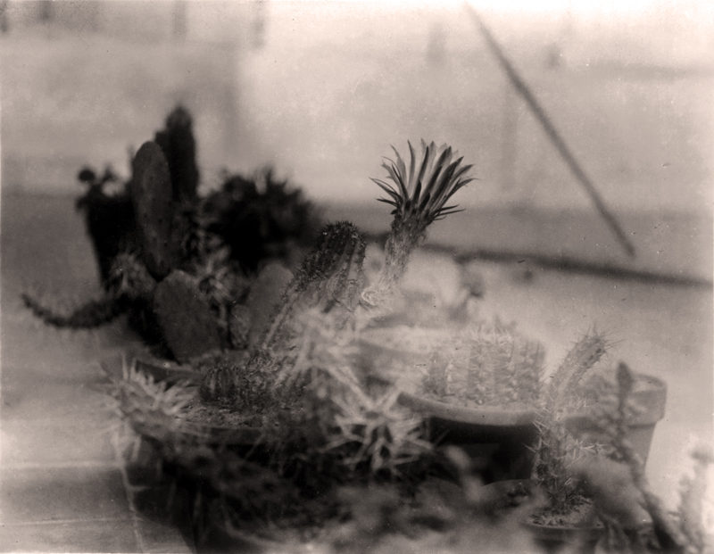 cactus 03 - sepia - baja Version 2